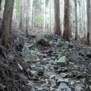 乾徳山最初の杉林の中の登り