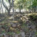 台風一過、葉っぱや小枝が登山道を埋め尽くす