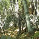 石垣だけが残る小屋の跡