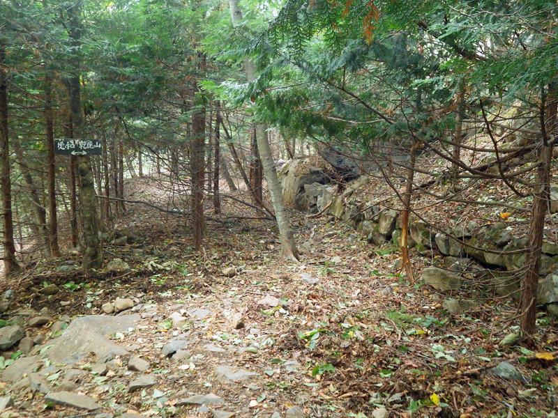 林道と交差