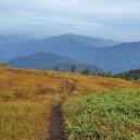 中門岳からさらに北へ進むと木道から外れた踏み跡が続いている。
