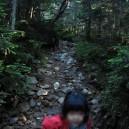 夏沢峠への登り2