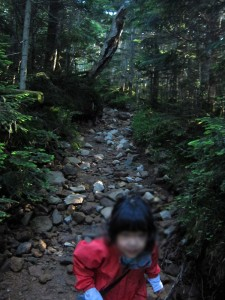 夏沢峠への登り