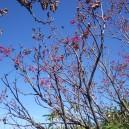 ダケカンバの赤い実