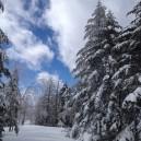 まっさらな雪の上を歩くのは気持ちいい