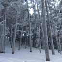 林の向こうに高見石小屋が見える