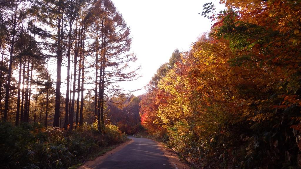 山を下るとそこは紅葉真っ盛り