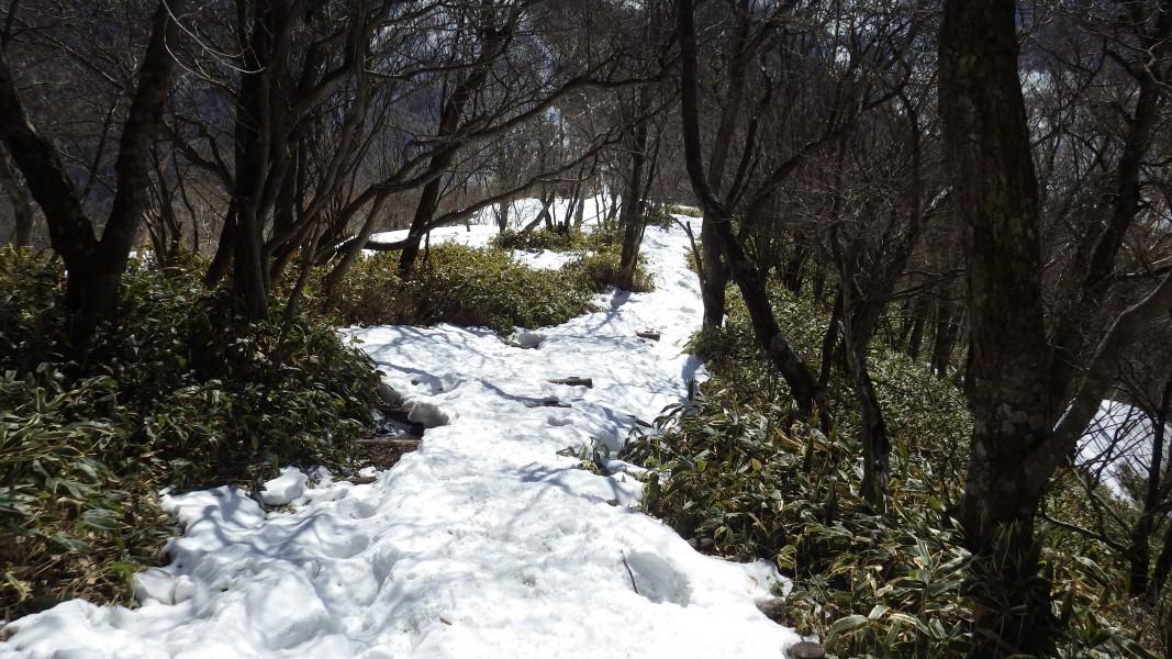 黒檜山南斜面の下り