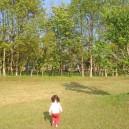 涸沼自然公園キャンプ場、テントサイトへ戻る