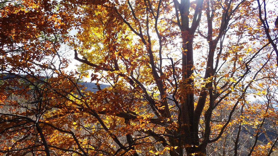 午後の日差しを浴びる紅葉