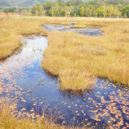 尾瀬の池塘