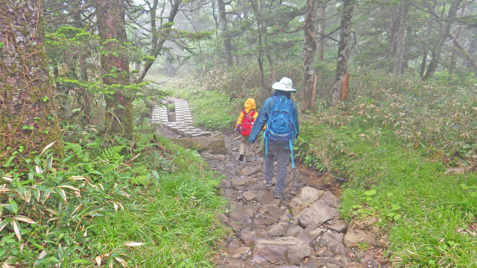 早池峰山の樹林帯