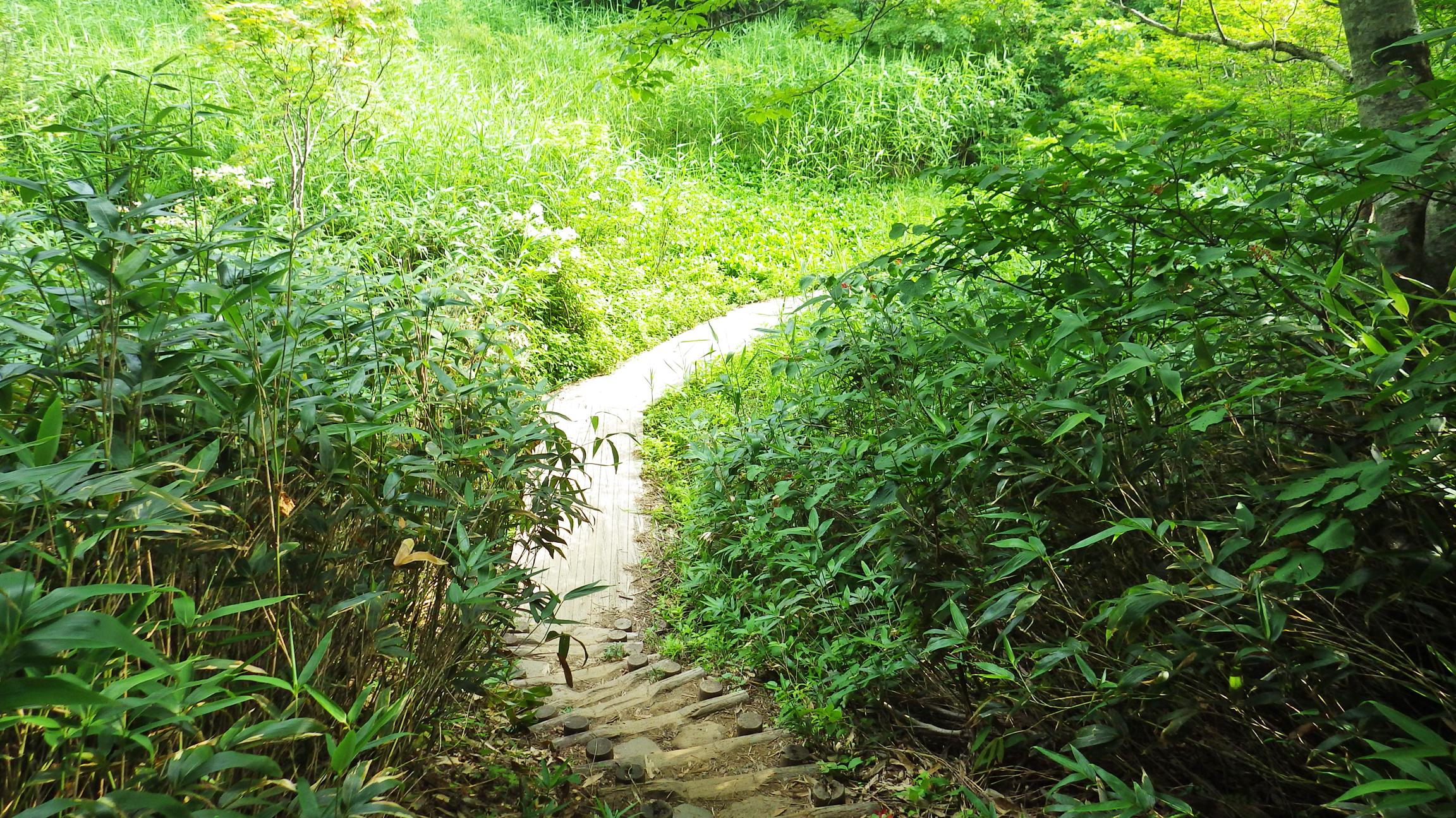中の湯跡の上の木道