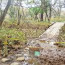 赤沼分岐の橋