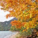 中禅寺湖・千手ヶ浜の紅葉