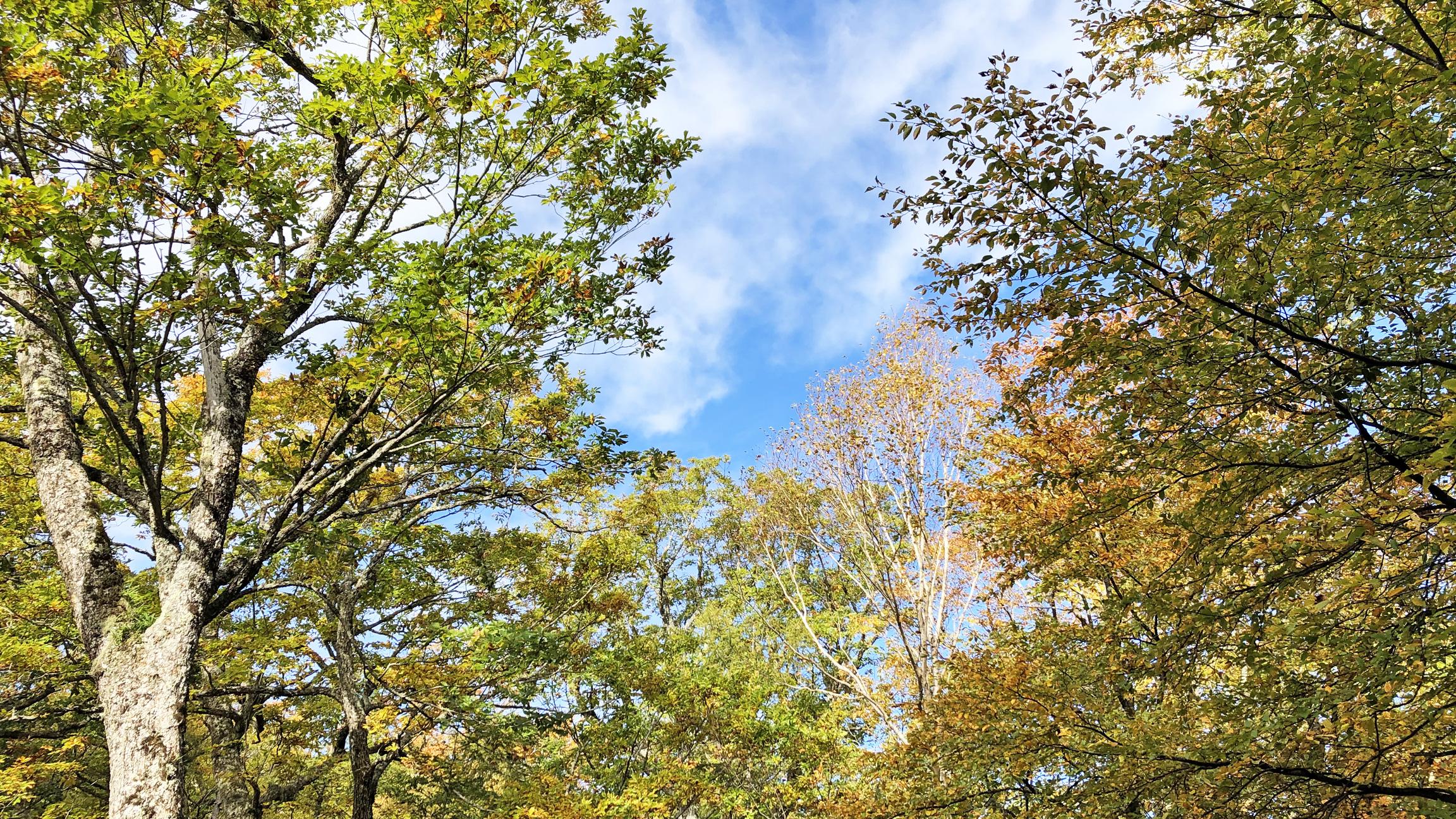 色づき始めた紅葉と青空