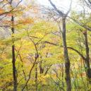 谷川岳・土合口付近の紅葉