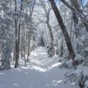 いかにも冬の北八ツの道