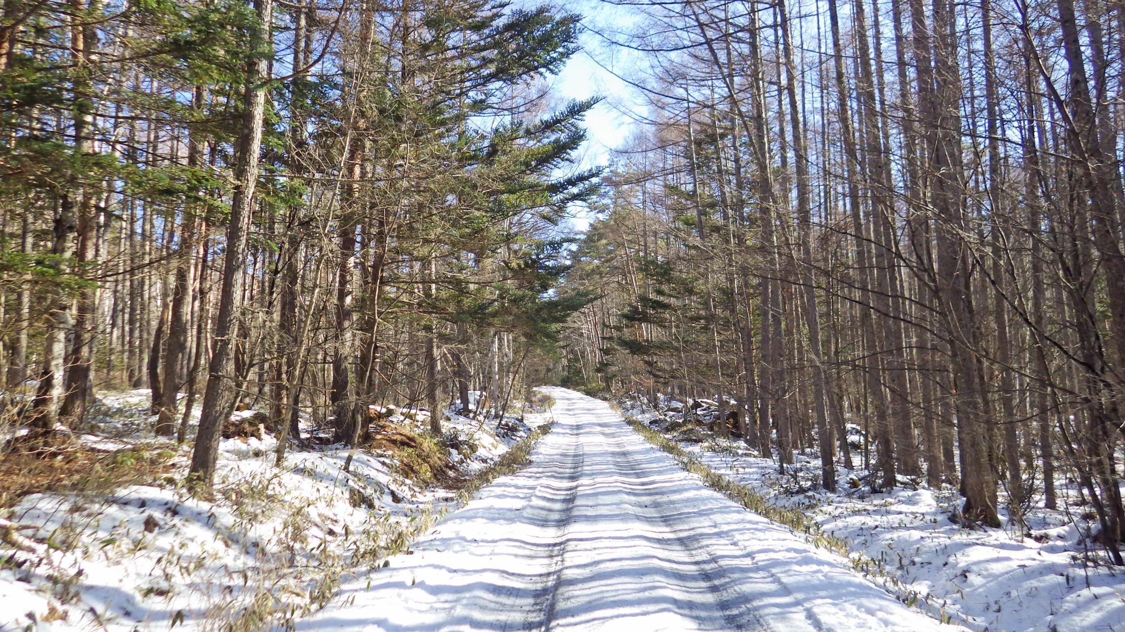 美濃戸口~美濃戸の林道