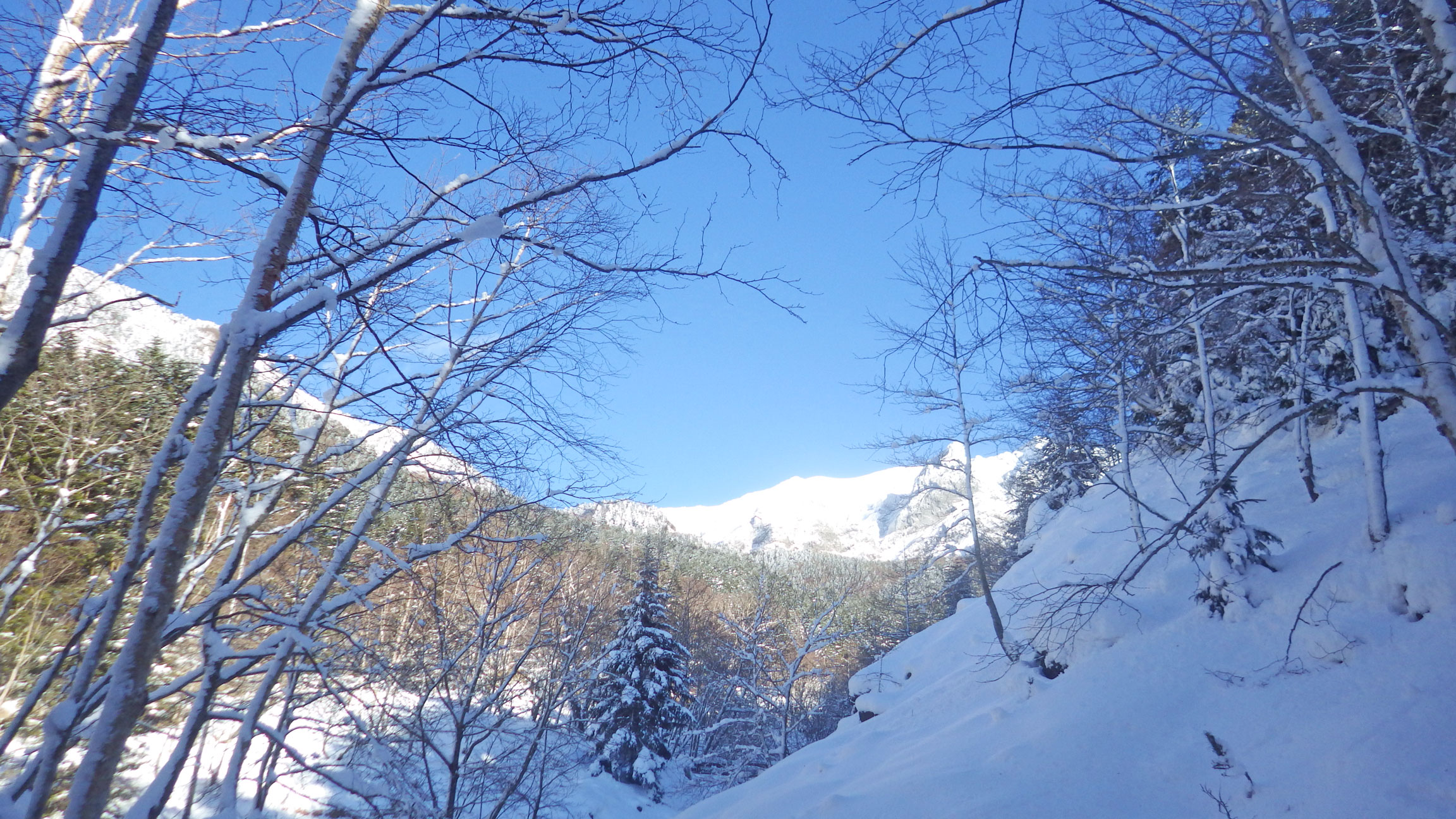 北沢から見上げた硫黄岳方面の稜線
