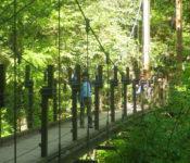 高尾山4号路の吊り橋