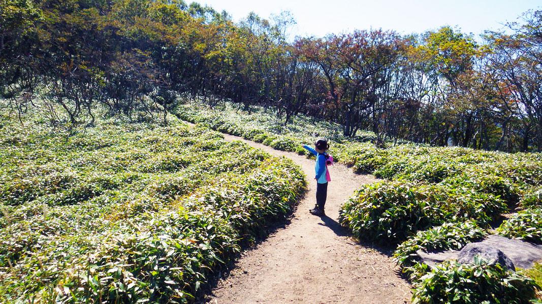 駒ヶ岳への登り