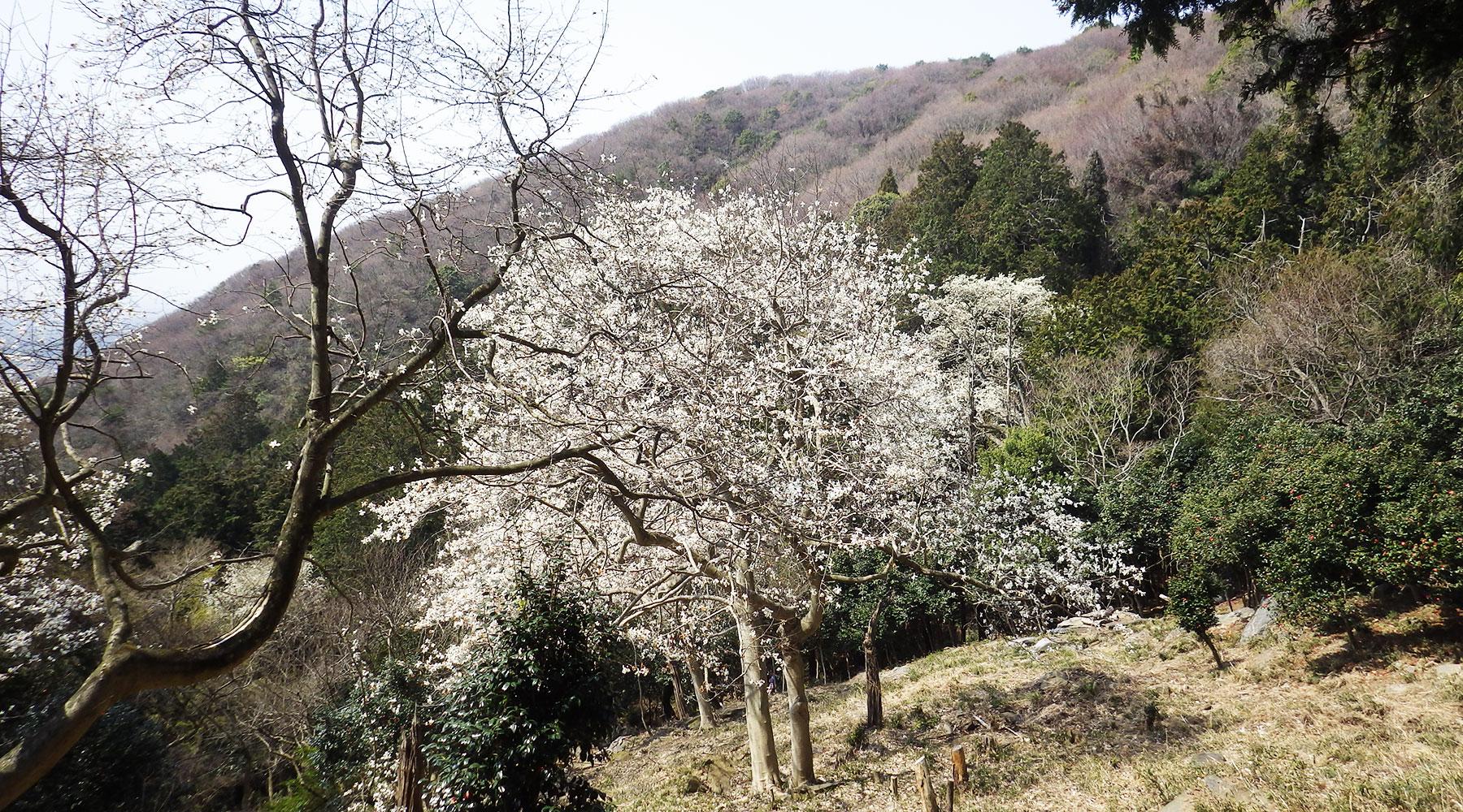極楽寺コース