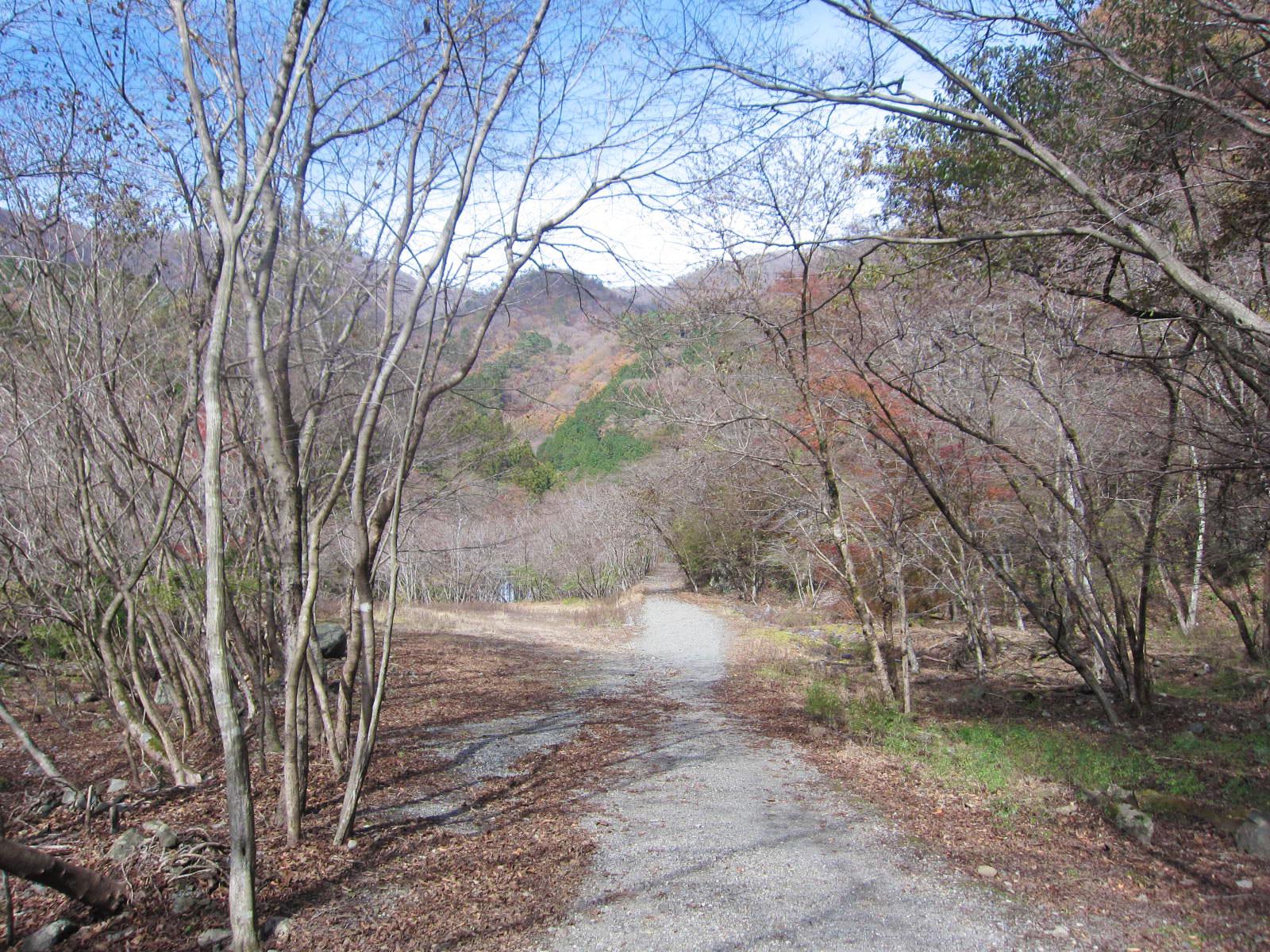 大倉~二俣の林道