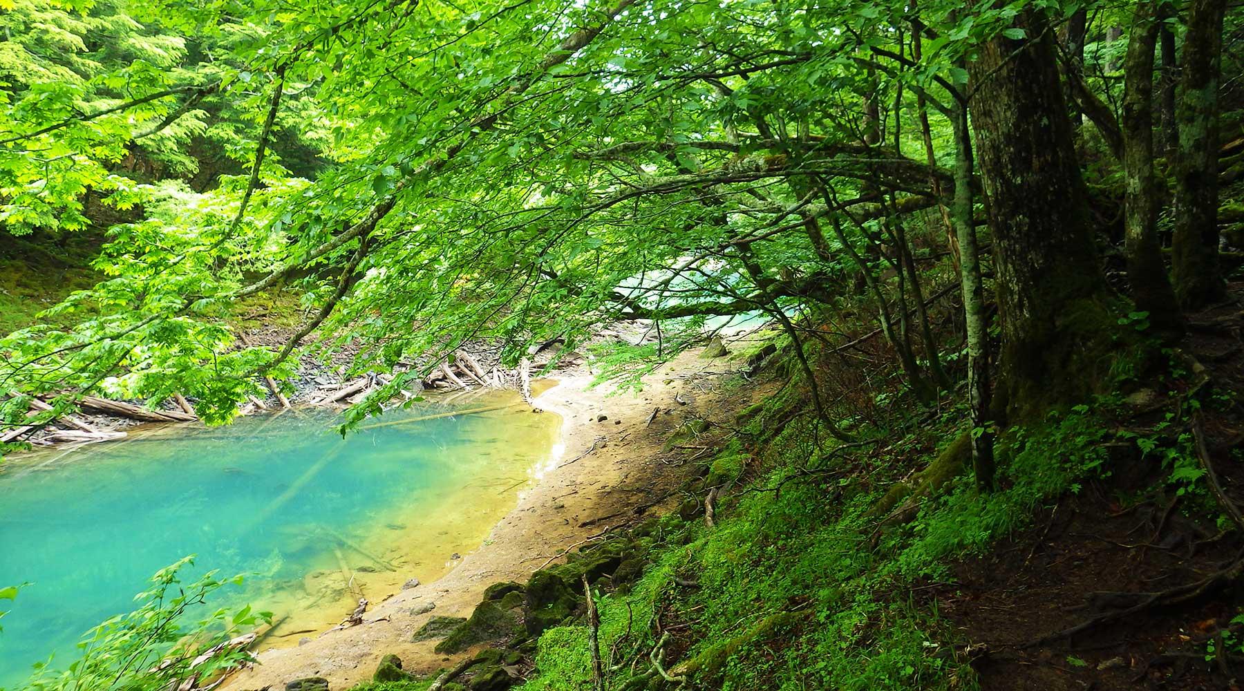 刈込湖と切込湖の境