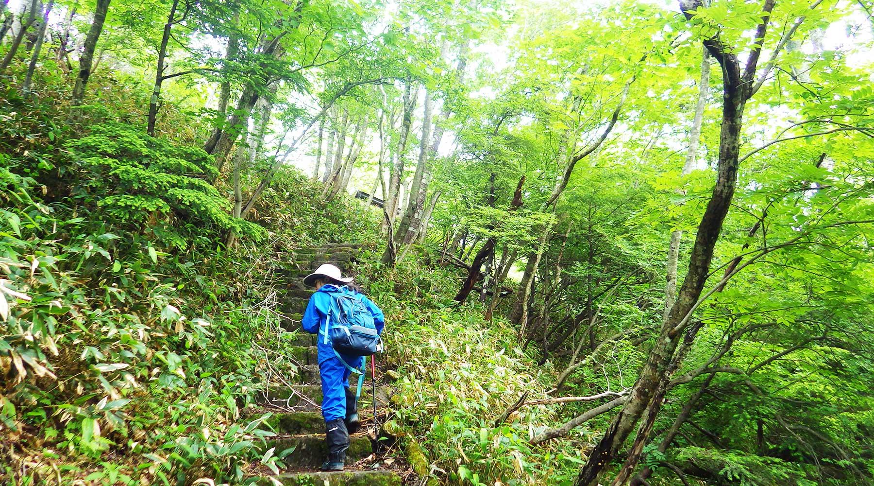 涸沼から山王林道への登り