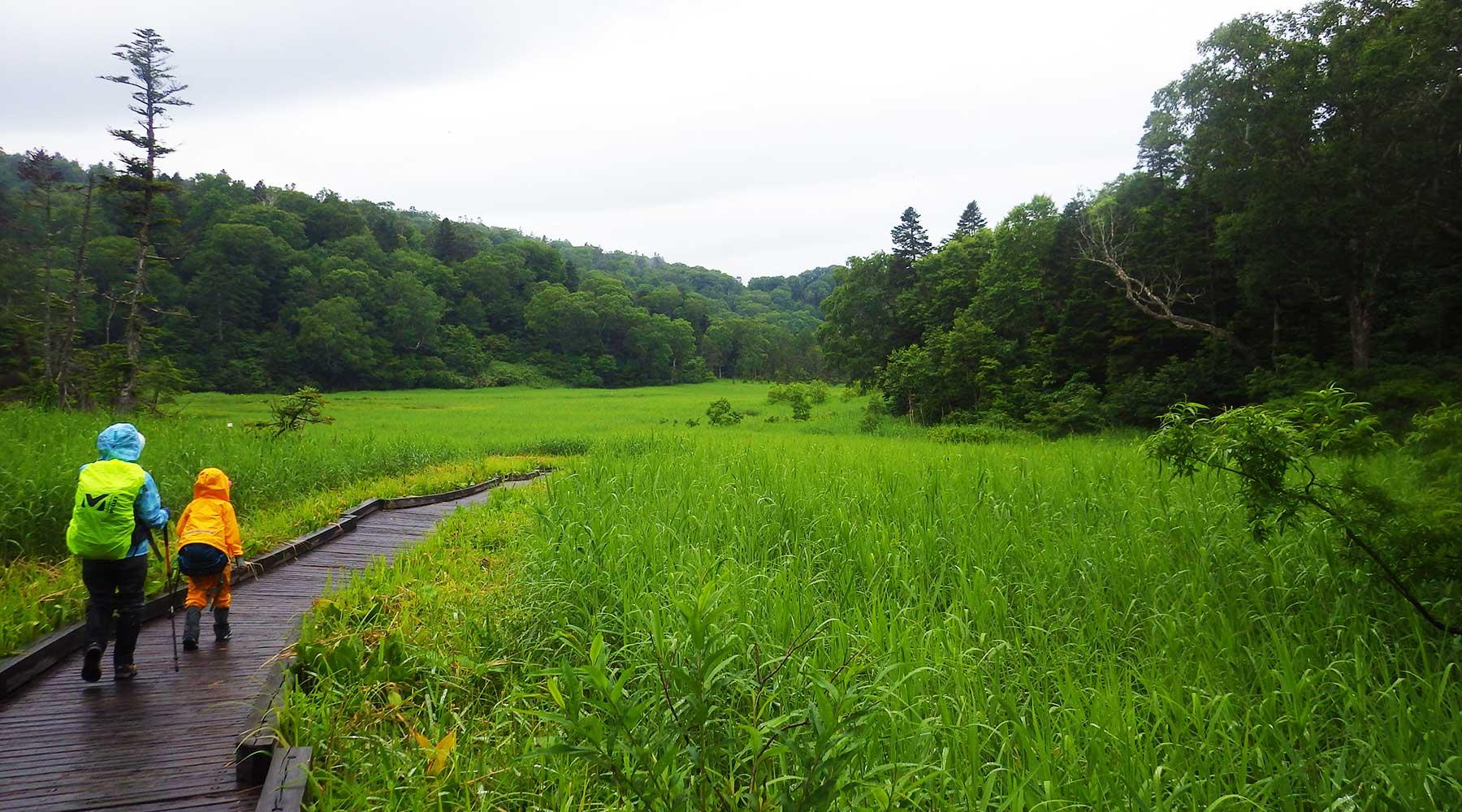 御池近くの木道