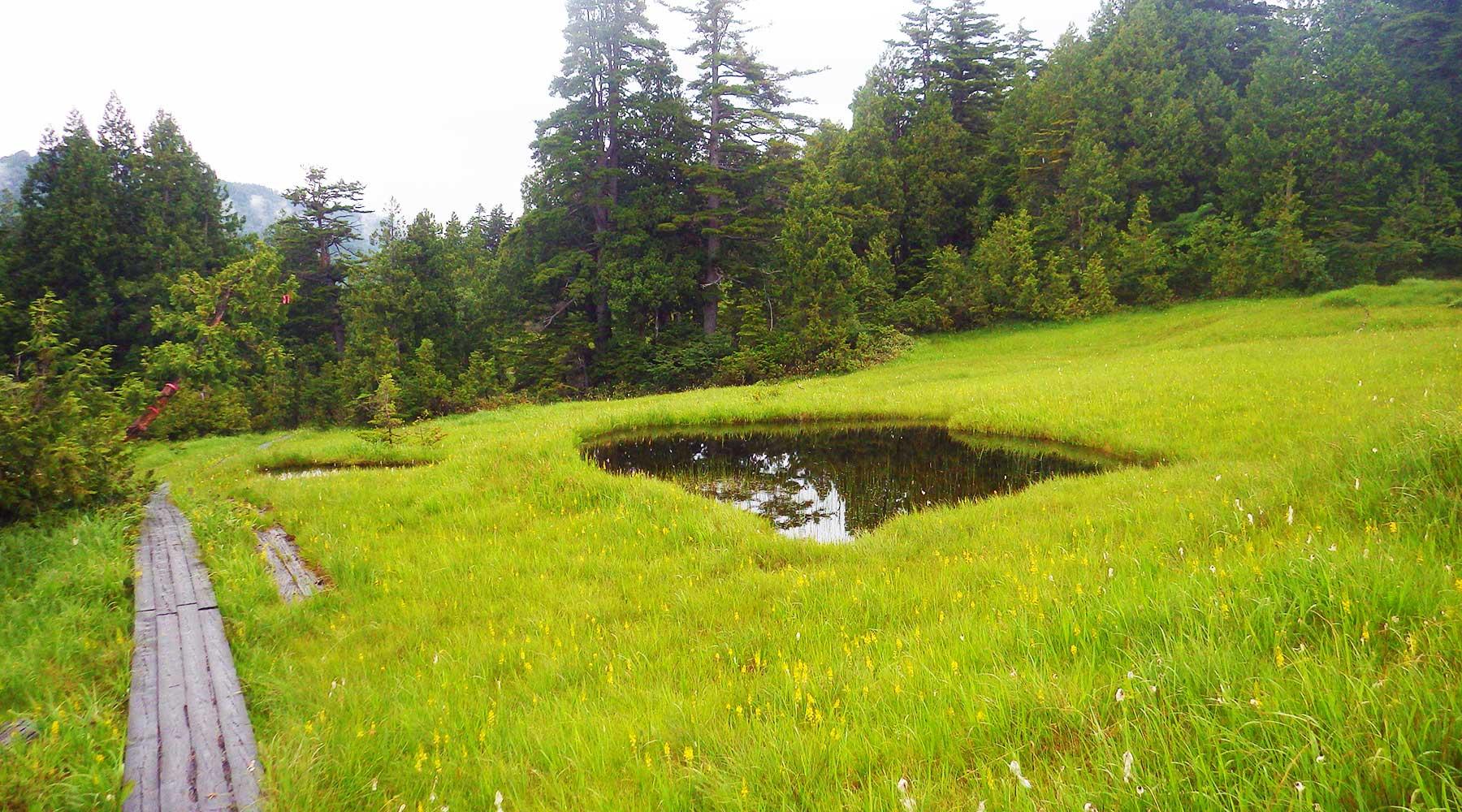 燧裏林道の池塘