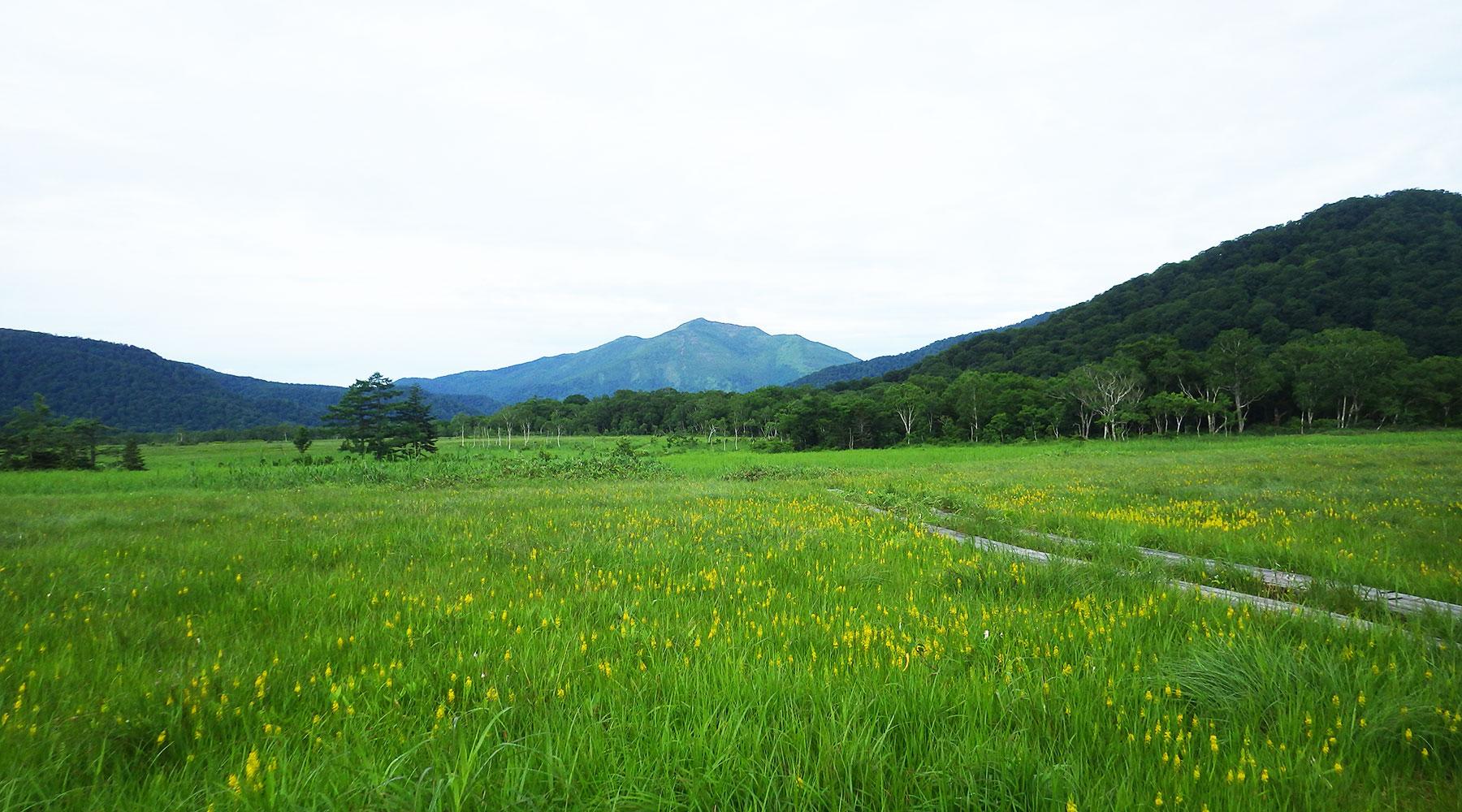 尾瀬ヶ原の向こうに見える至仏山