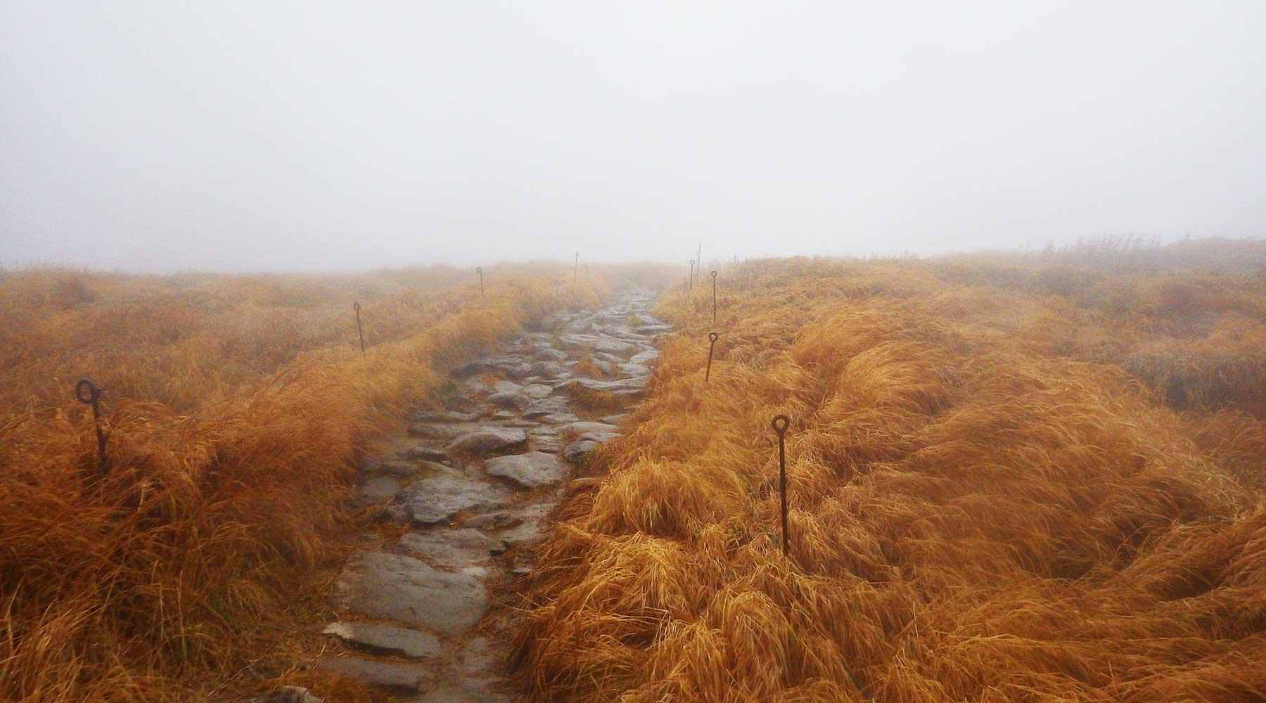 月山山頂の草原