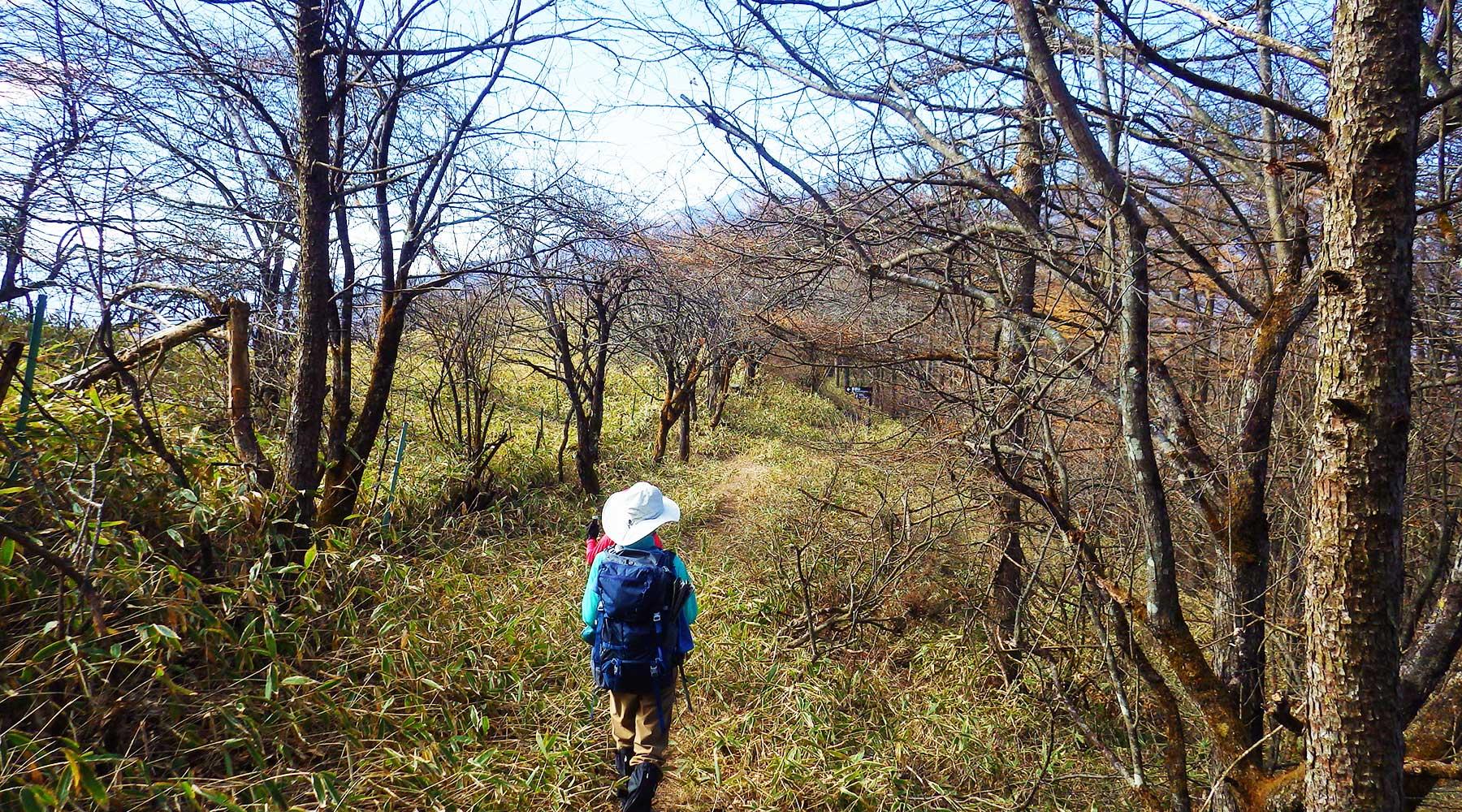登りで通過した平沢山への分岐へ戻ってきた。