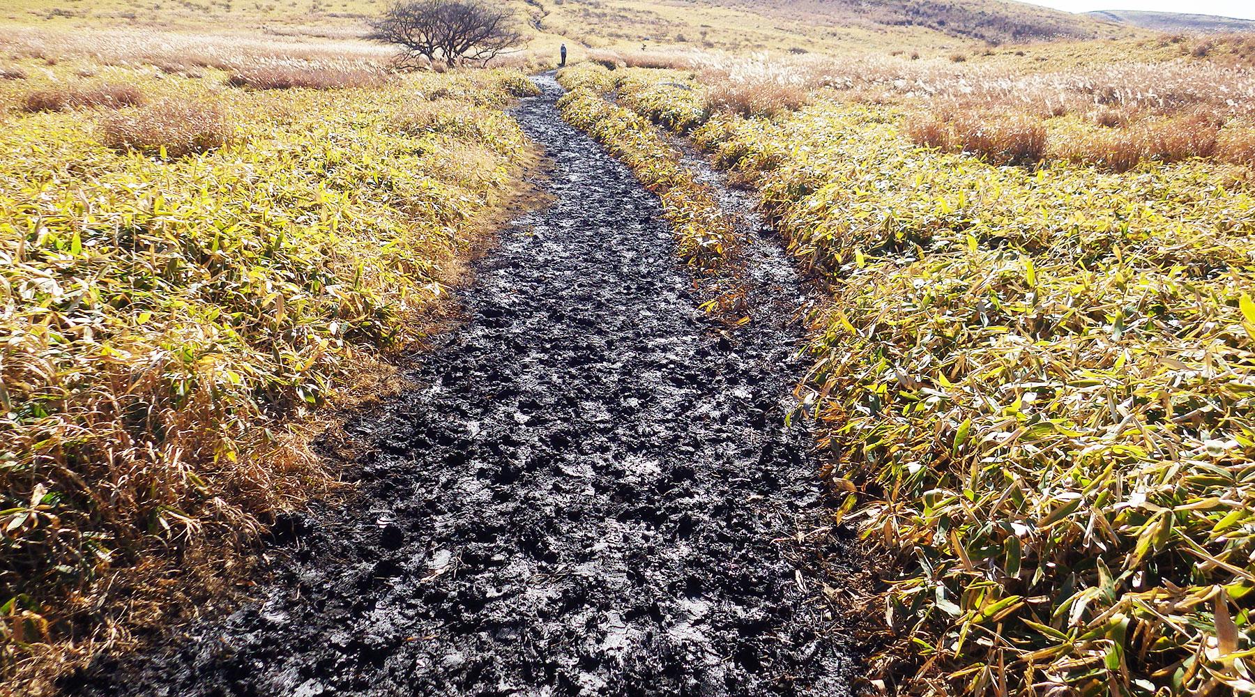 今日の登山道はほぼ泥濘状態