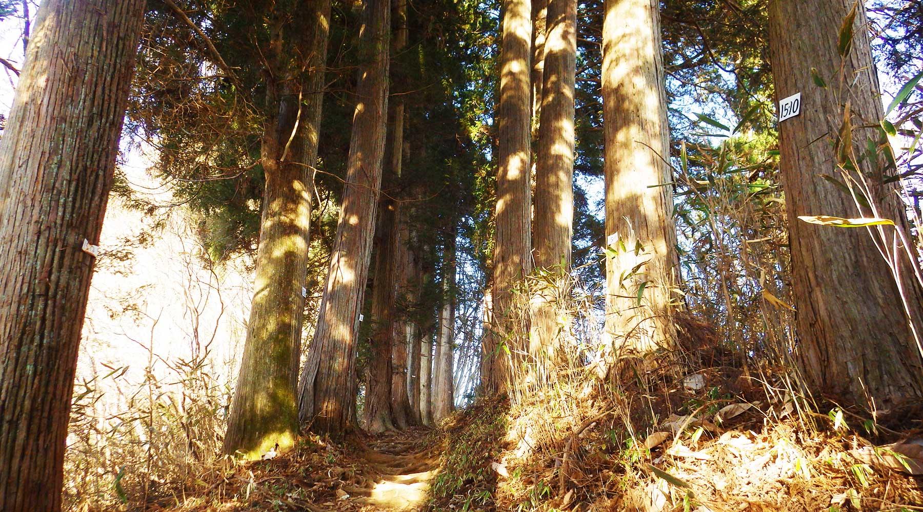 奥の院へは杉林の中を通ってゆく