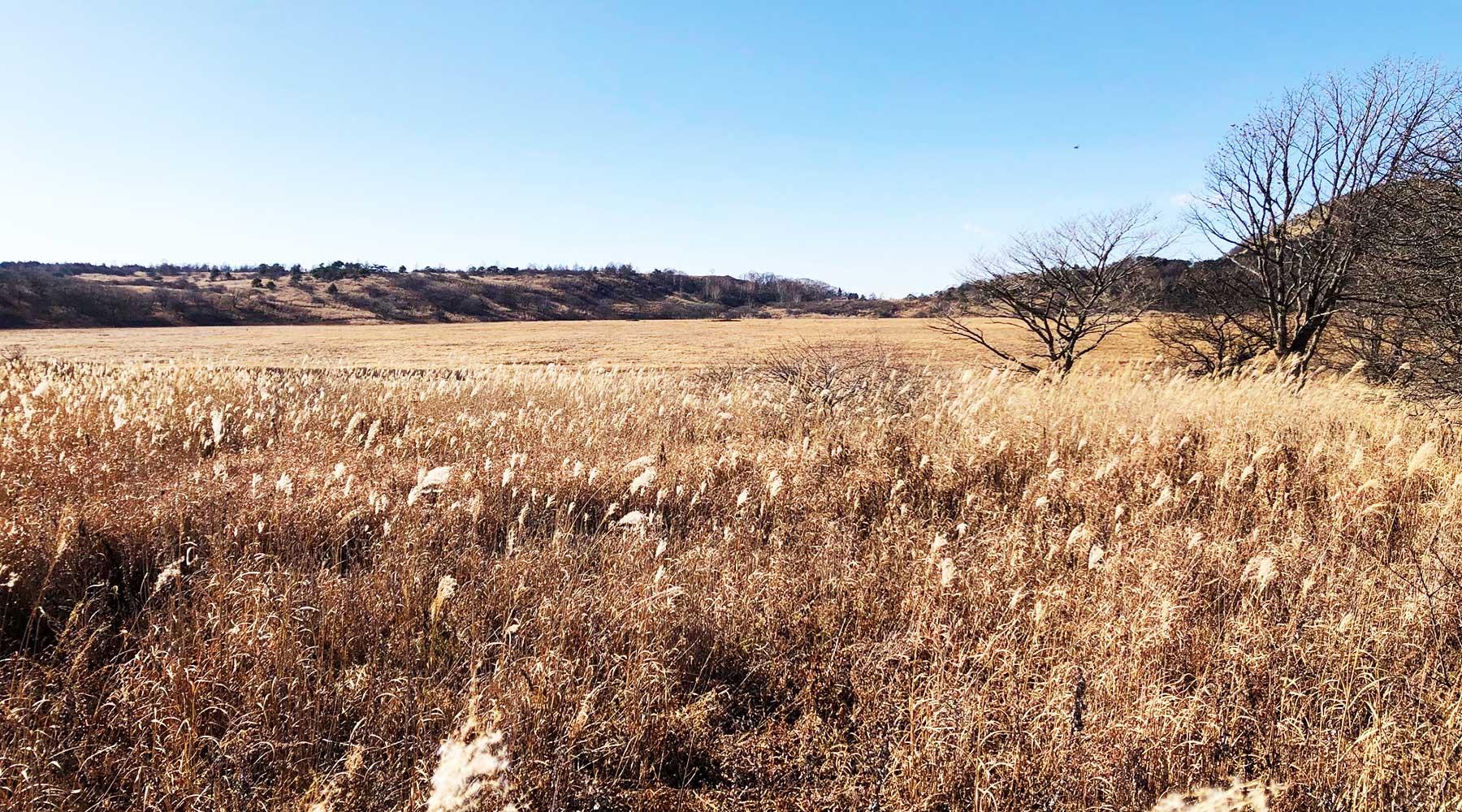 冬枯れの八島ヶ原湿原
