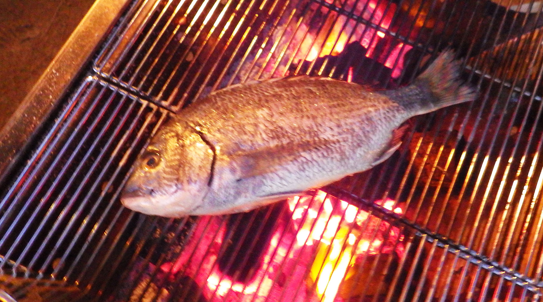 キャンプ飯・黒鯛の網焼き