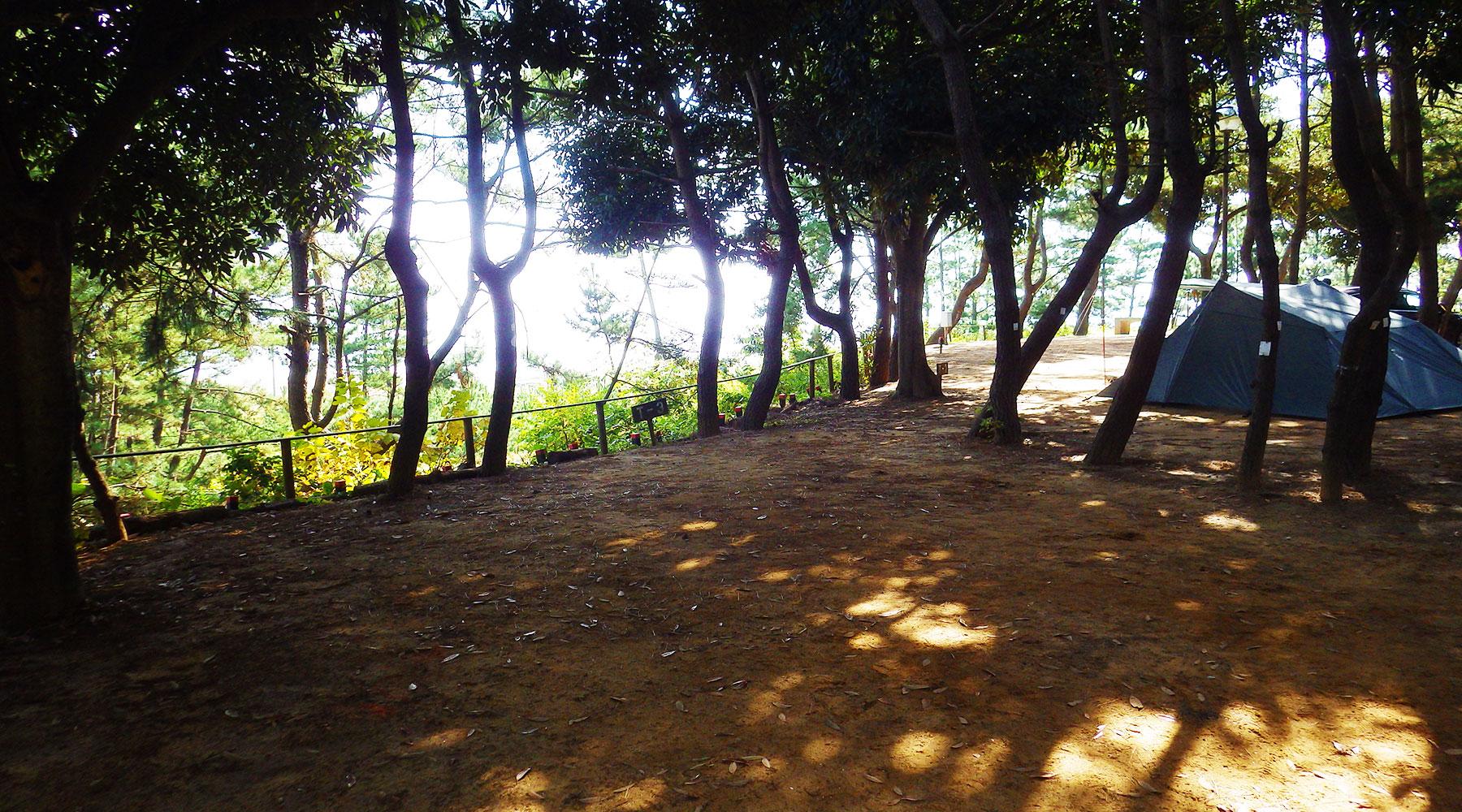 大洗サンビーチキャンプ場内・松林サイト