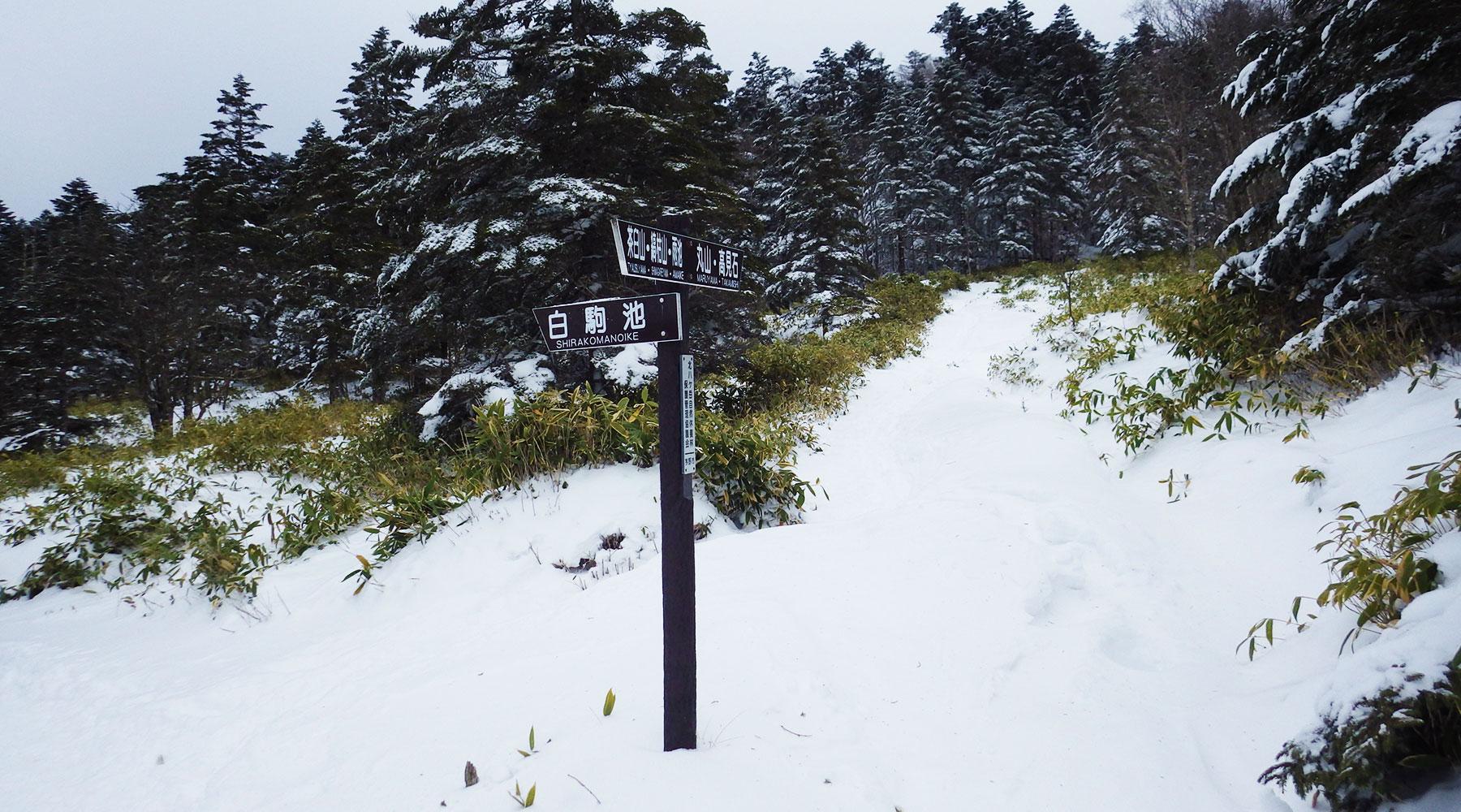 麦草峠から丸山経由高見石への登り口と白駒池への分岐