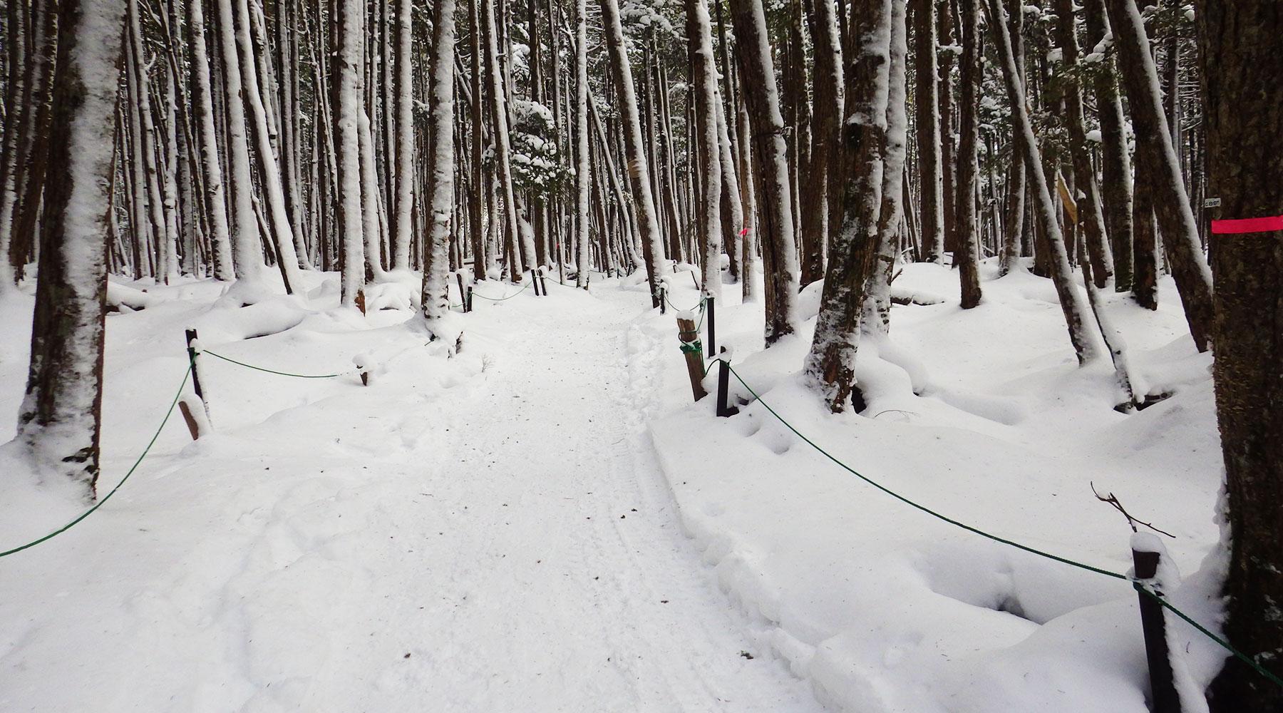 白駒池への道