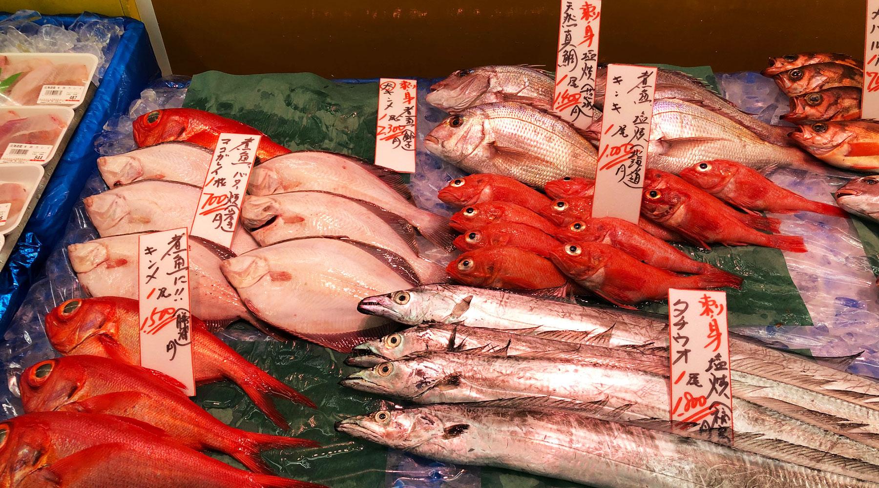 那珂湊の魚