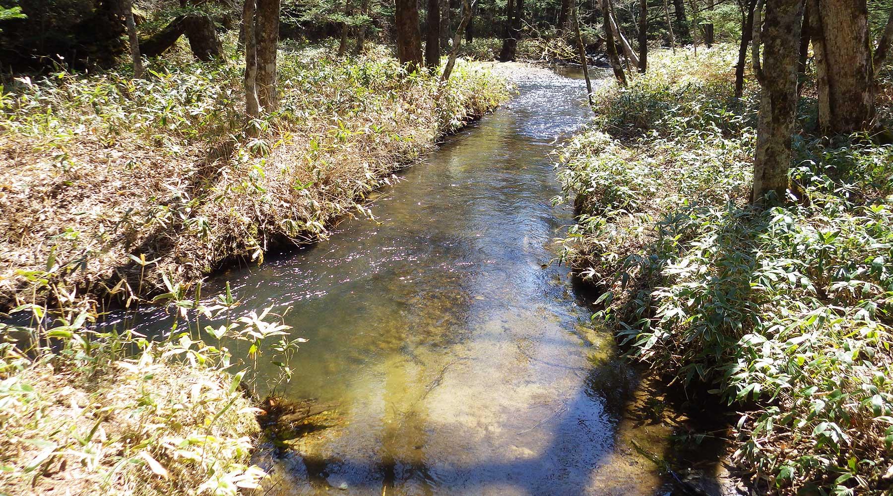 湯滝下の湯川