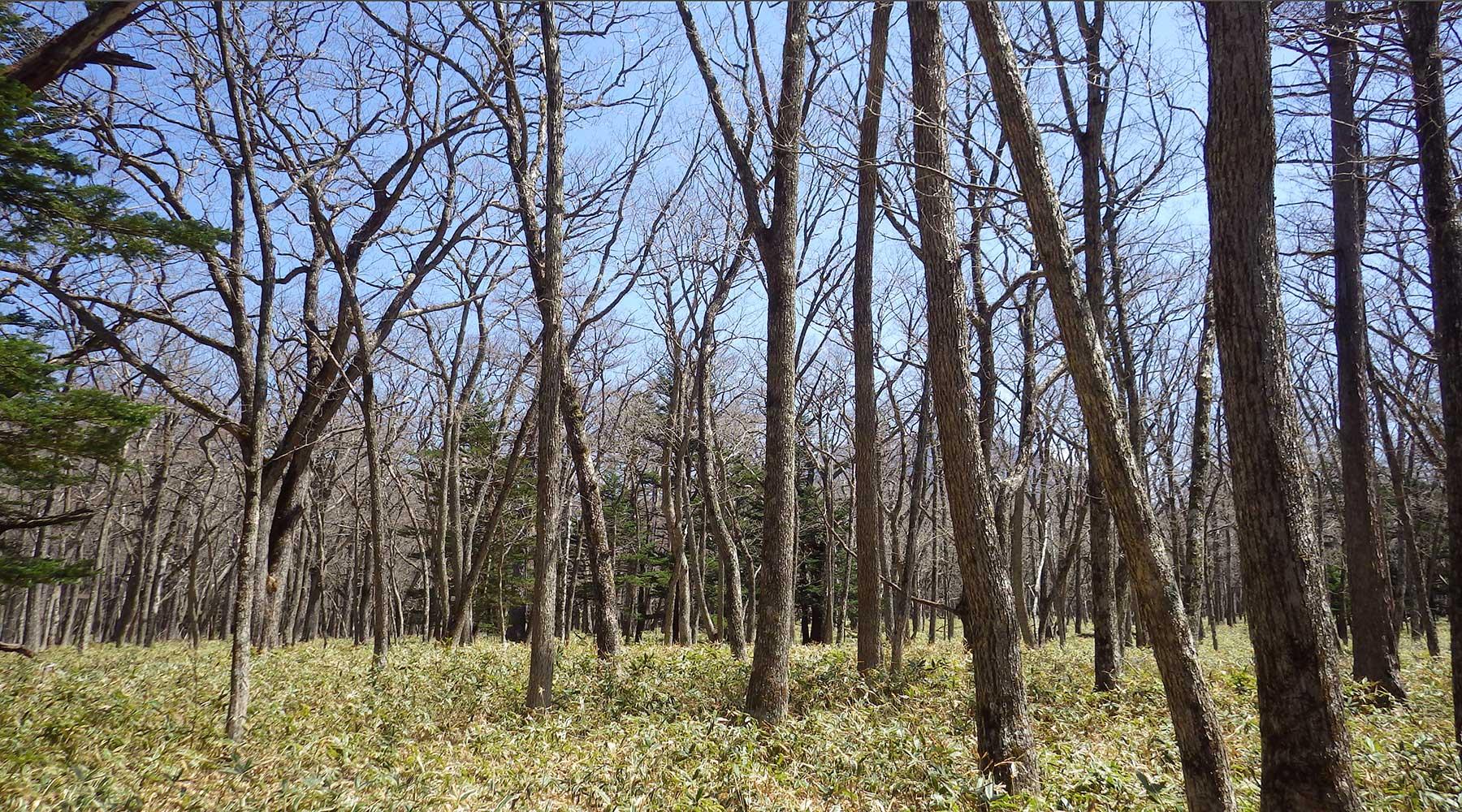 迂回路周辺の林