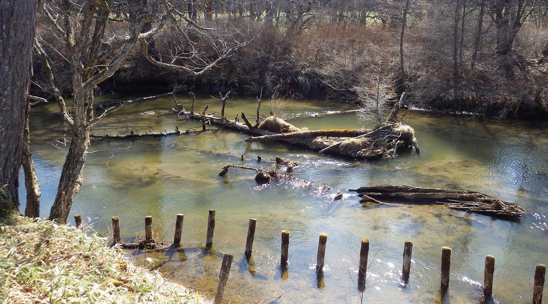 戦場ヶ原の湯川