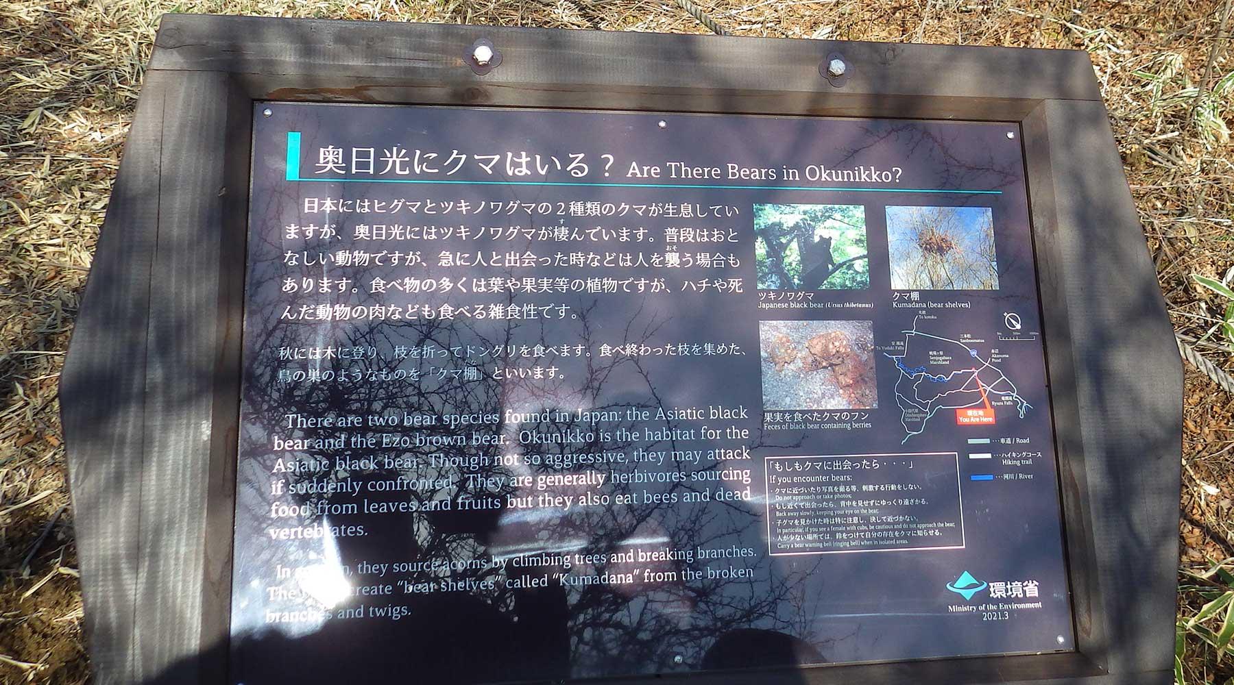 戦場ヶ原の熊について