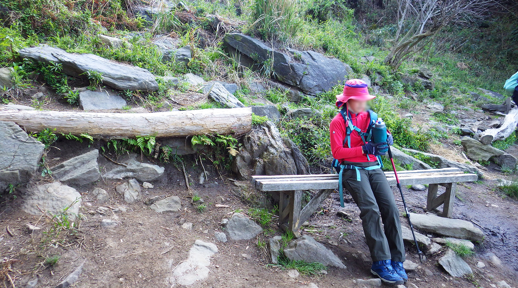 宝篋山・極楽寺コースのコブシが生えている所も休憩スポット