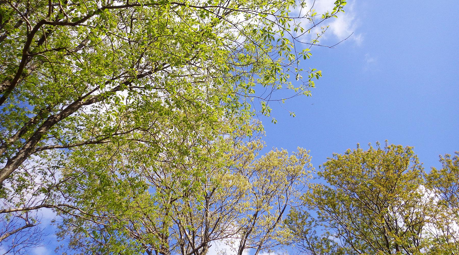 宝篋山・山桜の森
