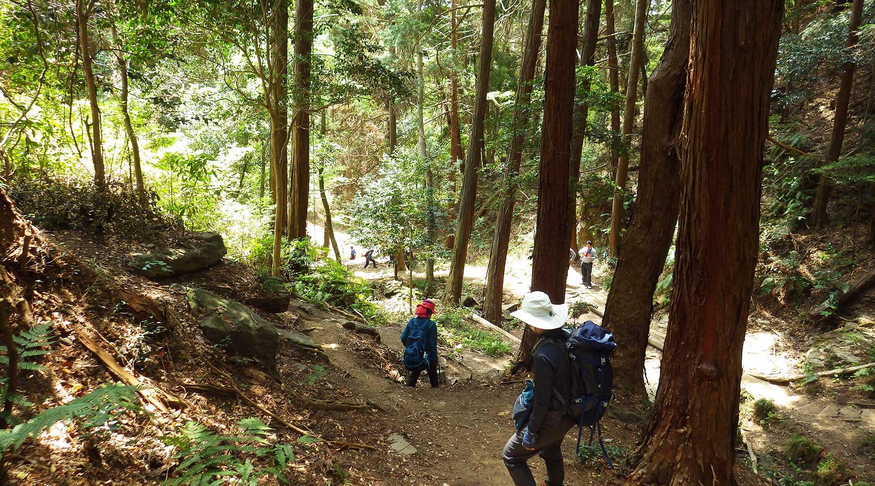 宝篋山極楽寺コースの谷間へ下る